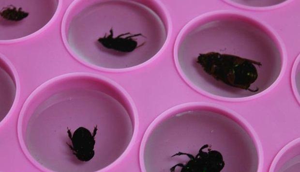 Медленно заливайте новой порцией резины жуков в формочках, стараясь не допустить появления в резине пузырьков