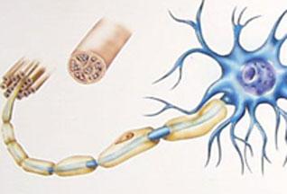 Итак, здесь перечислены средства, которые помогут поддержать восстановление и регенерацию миелиновой оболочки, а так же предотвратить склероз.
