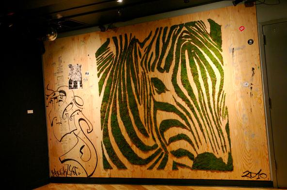 эко-граффити из мха: зебра