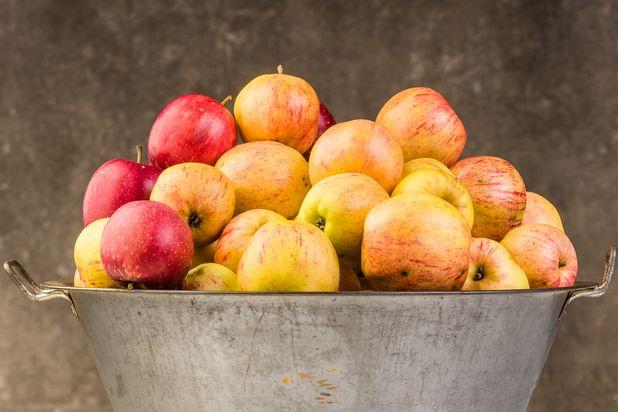 Как правильно – оптимально и долго – хранить яблоки: гора яблок в металлическом тазу