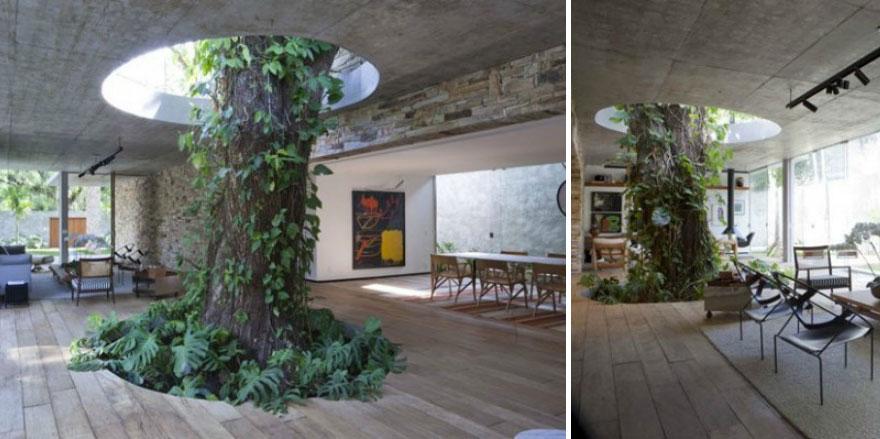 вместо цветов в горшочках внутри дома/дачи нечто огромное и живое вроде многолетнего дерева