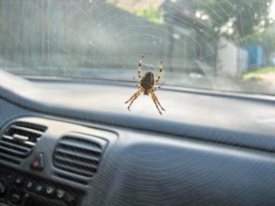 Как избавиться от пауков в машине