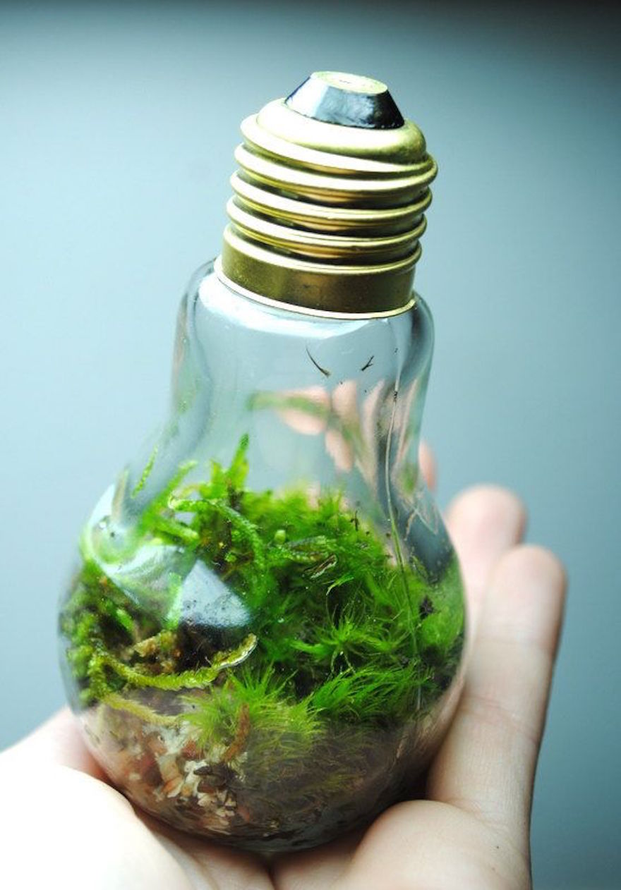мини-экосистема из лампочек накаливания