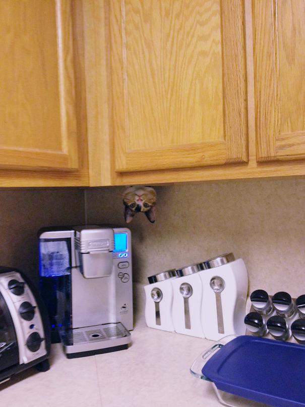 Кот-ниндзя, выглядывающий вниз головой из-под шкафа