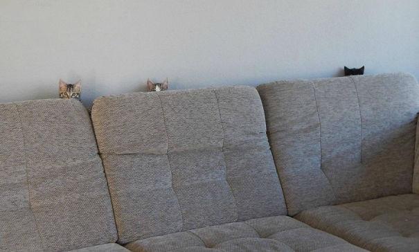 Кот-ниндзя: три морды за диваном - молодняк тренируется в профессии