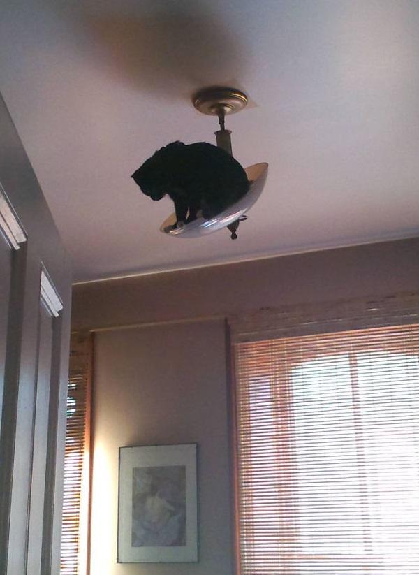 Кот-ниндзя: на лампе