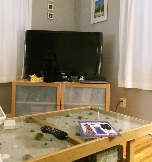 Кот-ниндзя: черный кот на фоне черного телеизора. Он невидим.