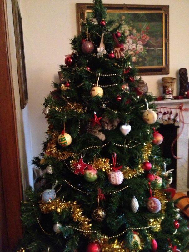 Кот-ниндзя: найди кота на елке