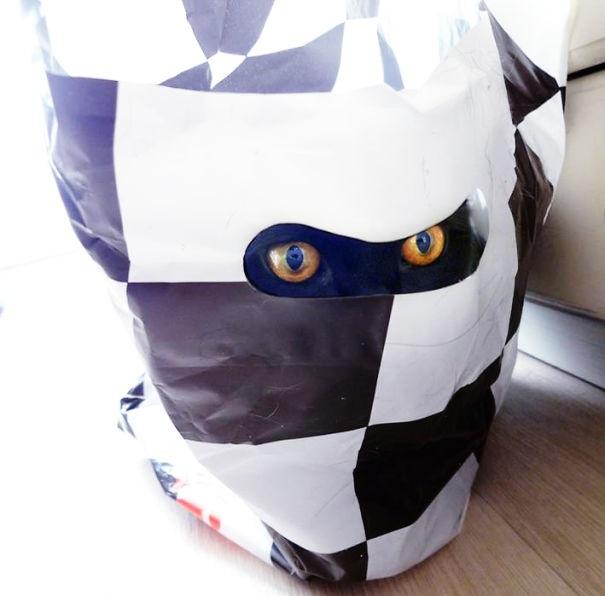 Кот-ниндзя: выглядывает из пакета