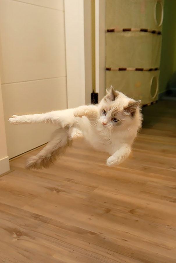 Кот-ниндзя: кий-я!