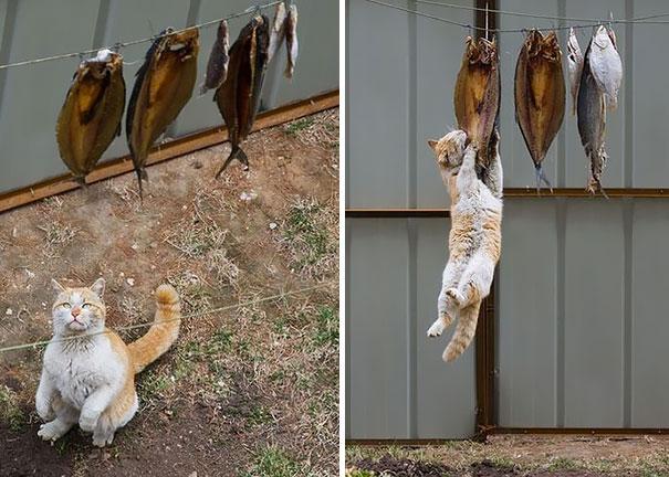 Кот-ниндзя: когда очень хочется рыбы