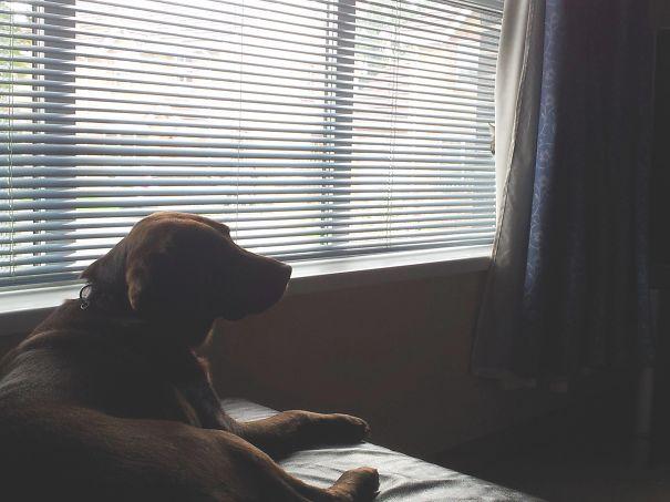 Кот-ниндзя: засада за шторой - на собаку
