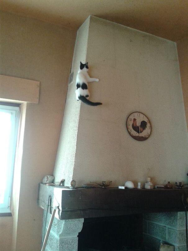 Кот-ниндзя: кот на трубе от камина