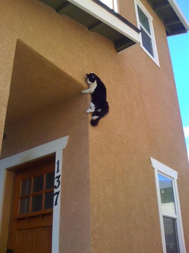 Кот-ниндзя: и снова кот на стене