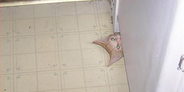 Кот-ниндзя: выглядывает из-под шкафа на кухне мордой вверх