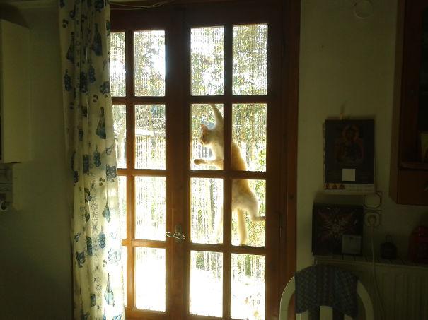Кот-ниндзя: кот на окне