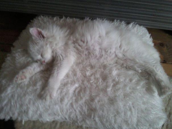 Кот-ниндзя: белый кот на белом коврике