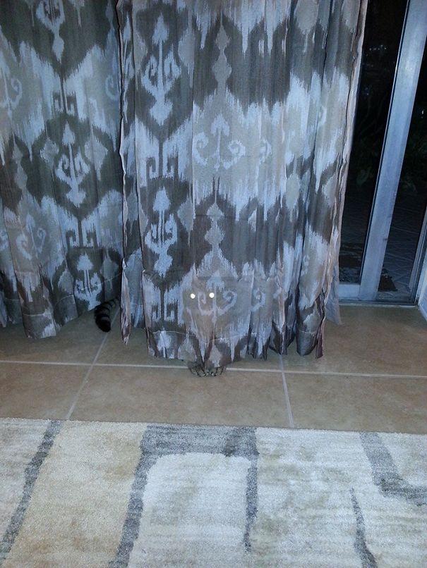 Кот-ниндзя: маскируется за шторой