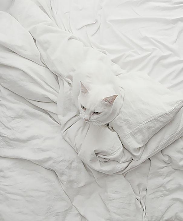 Кот-ниндзя: белый кот на белом постельном белье