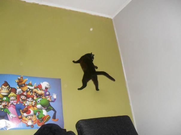 Кот-ниндзя: ходит по стенам