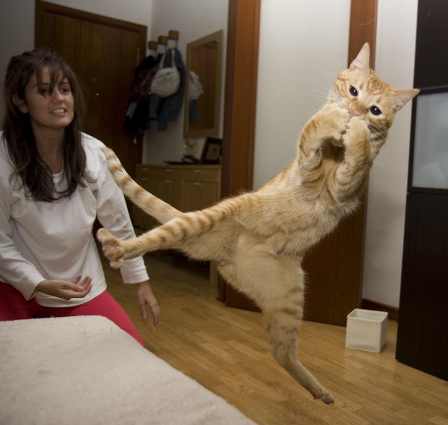 Кот-ниндзя: ловит обеими лапами добычу в прыжке