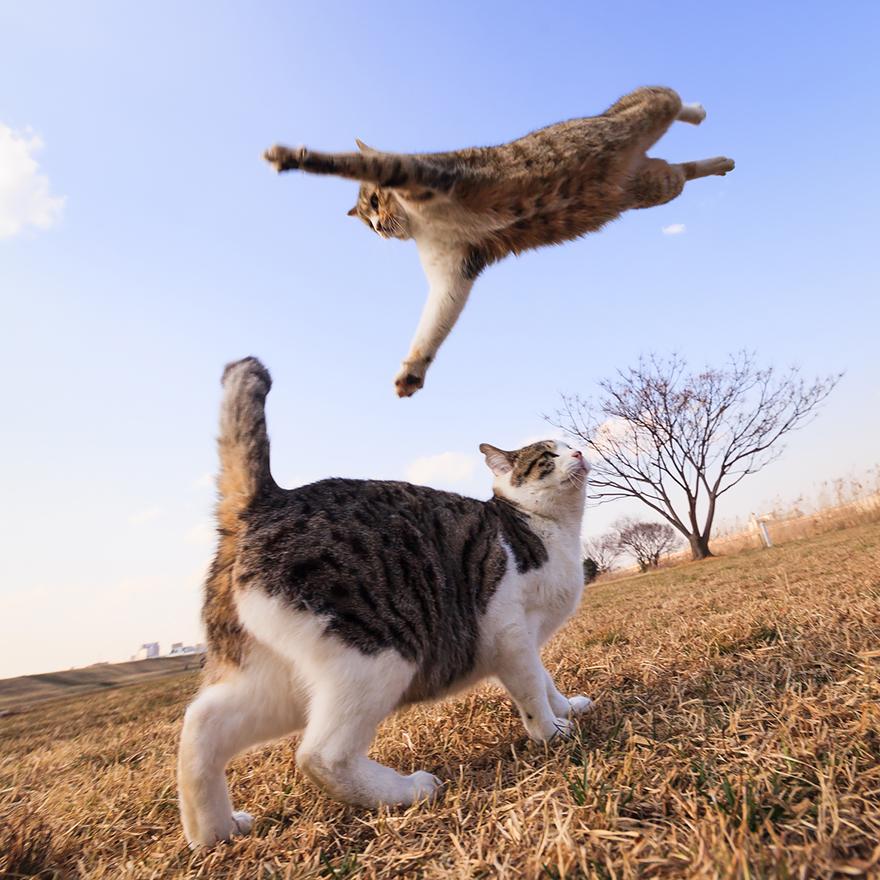 Кот-ниндзя: полет на соперника