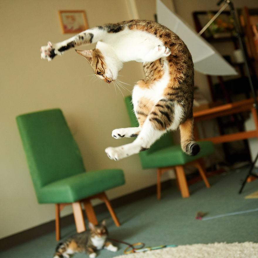 Кот-ниндзя: гибкость в прыжке