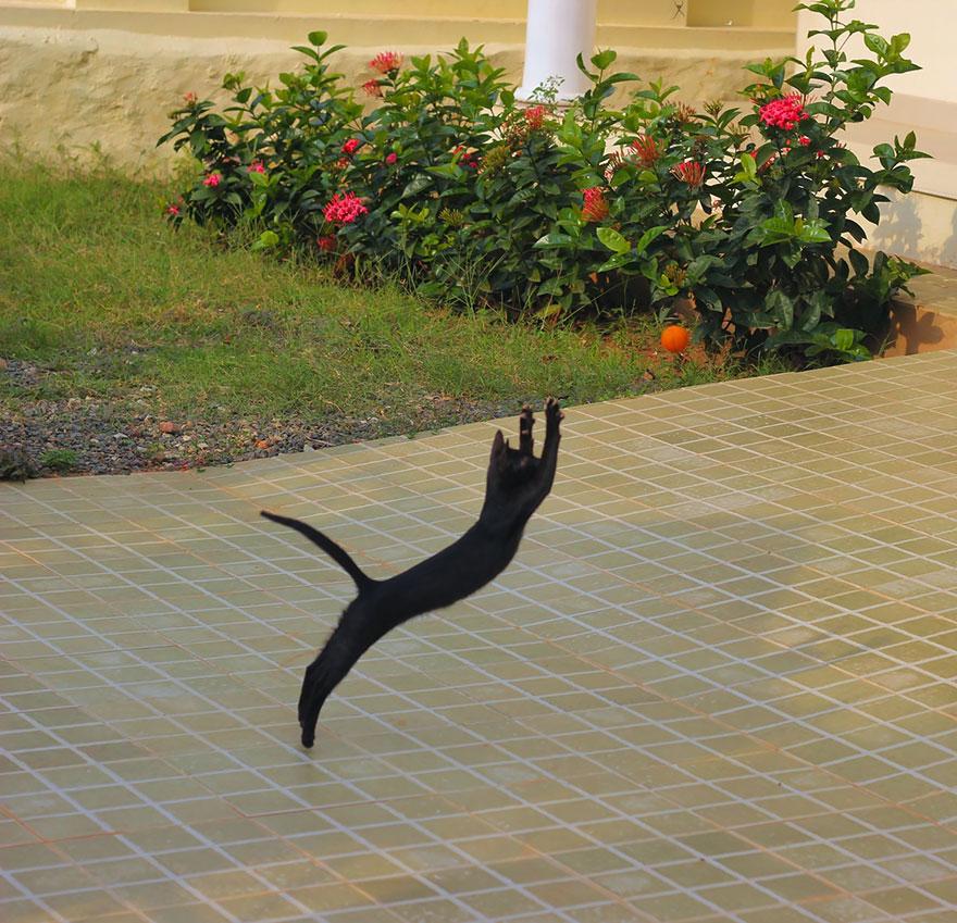 Кот-гимнаст: упражнение на растяжку - художественная гимнастика