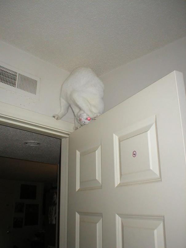 Кот-акробат: на двери