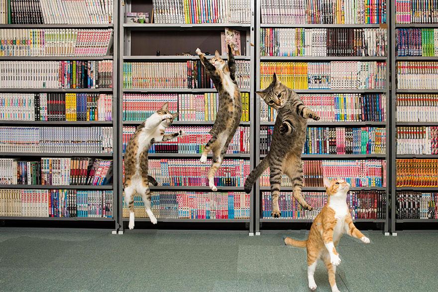 Кот-ниндзя: тренировки на прыгучесть