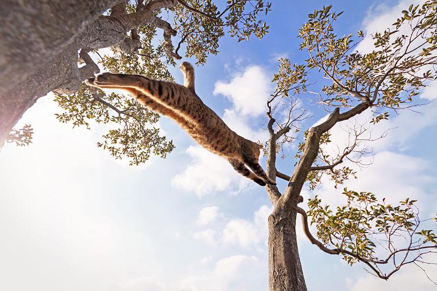 Кот-ниндзя: в полете с дерева на дерево