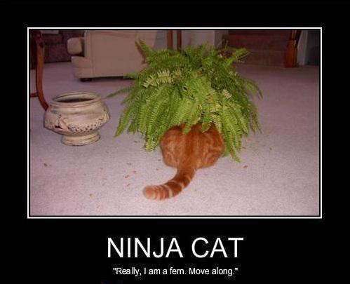 Кот-ниндзя: прячется в кусте