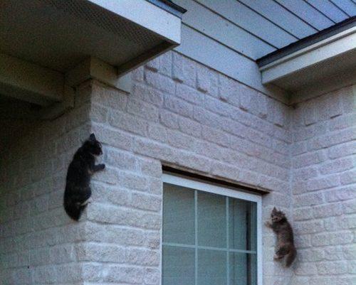 Кот-ниндзя: два кота на кирпичной стене