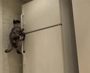 Кот-ниндзя: лезет на холодильник