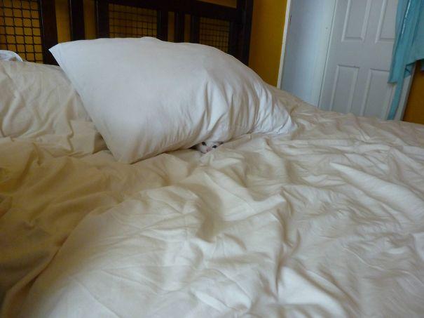 Кот-ниндзя: белый кот спрятался в белой пастели