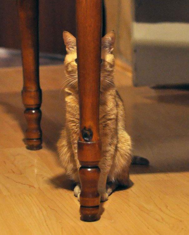Кот-ниндзя: спрятался