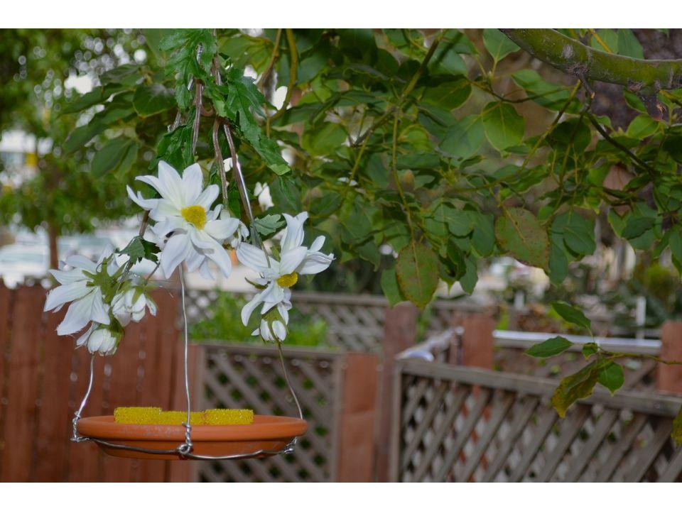 Подвесьте кормушку для бабочек на ветку тенистого дерева
