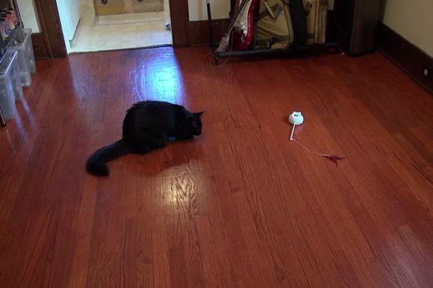 Mousr: умная игрушка для кота с сенсором движения