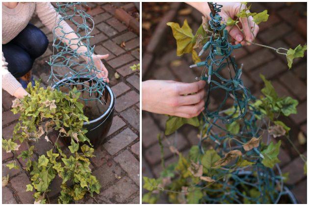 Как сделать новогоднюю елку своими руками: в горшок ставим живой плющ, обвеваем плющ вокруг сетки сверху и гирлянды с фонариками