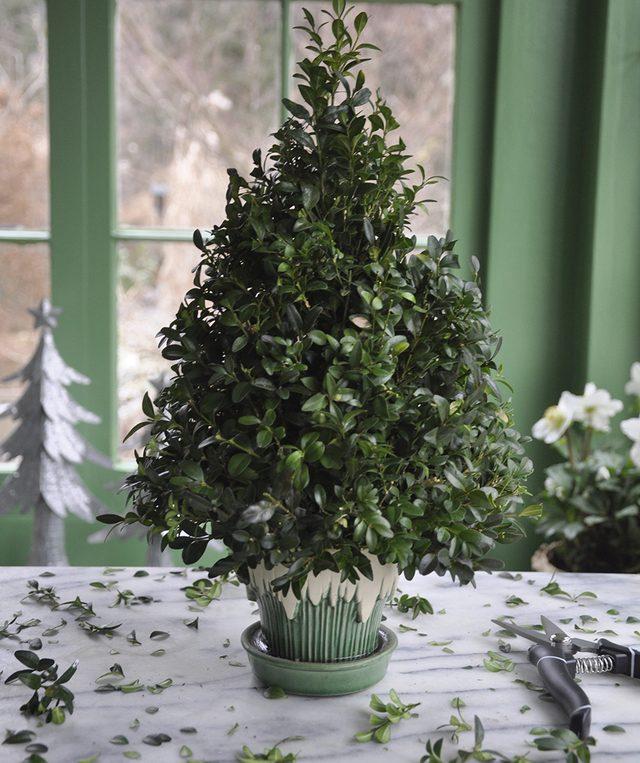 Как сделать новогоднюю елку своими руками: из веточек самшита на флористической губке - обрезаем ветки самшита векатором до формы елки