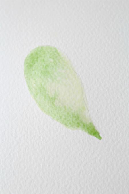 Далее кладется очередной слой того же (последнего) цвета, и когда краска все еще остается влажной, легонько наклоните лист, чтобы она немного перетекла на кончик нарисованного листика