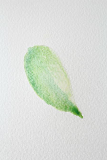 нанесите поверх очередной – новый - оттенок зеленого