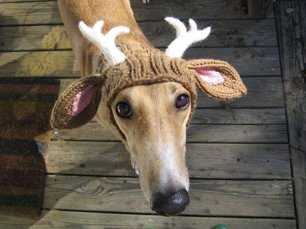 Шапочка-шарф-труба в виде оленьей головы