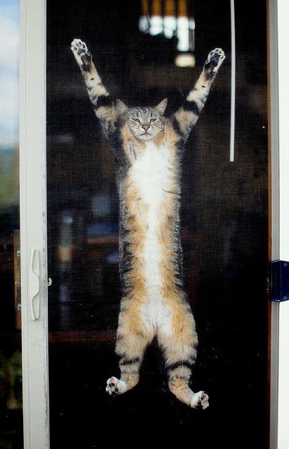 Кот-ниндзя, висящий на стекле