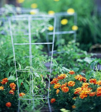 клетки для томатов - использование на огороде