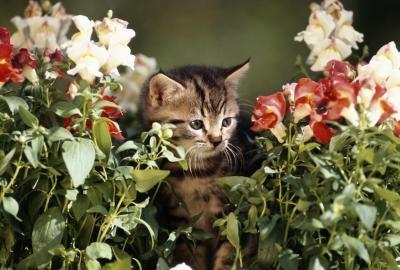 котенок в клумбе цветах