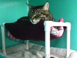 Под низ нашего лежака-гамака хорошо подложить что-то мягкое и плотное, т. к. кошки любят прятаться и внизу!