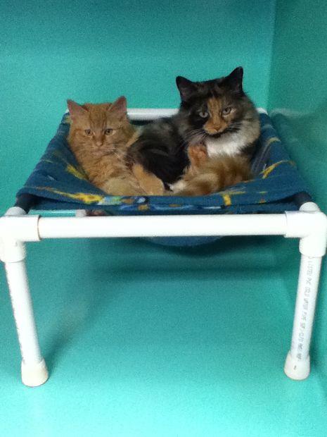 Гамак для крупных кошек – 34,3х43,2х55,9 см