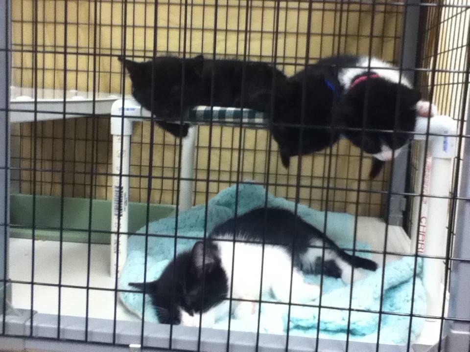 котята в гамаке-лежаке