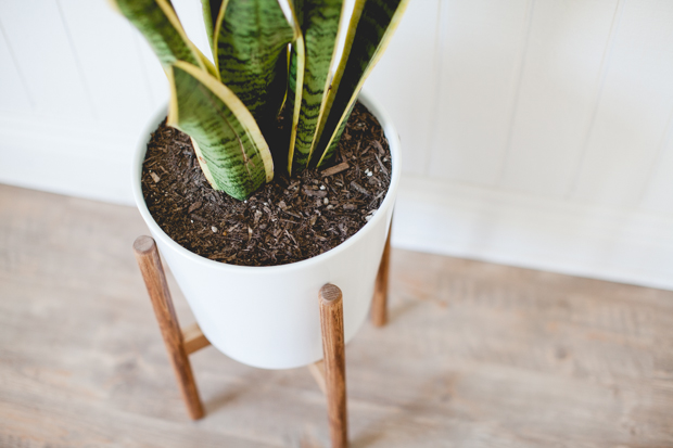 минималистичная стойка в стиле модерн вместе с цветком
